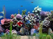 Screen shot: Aquarium