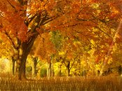 Herbstzeit Animation Wallpaper