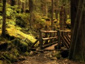 Screen shot: Puente en el Bosque