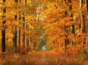 Automne Animation Wallpaper