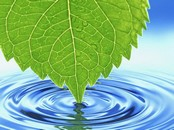 Green Leaf Animation Wallpaper