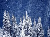 Screen shot: Snow Forest